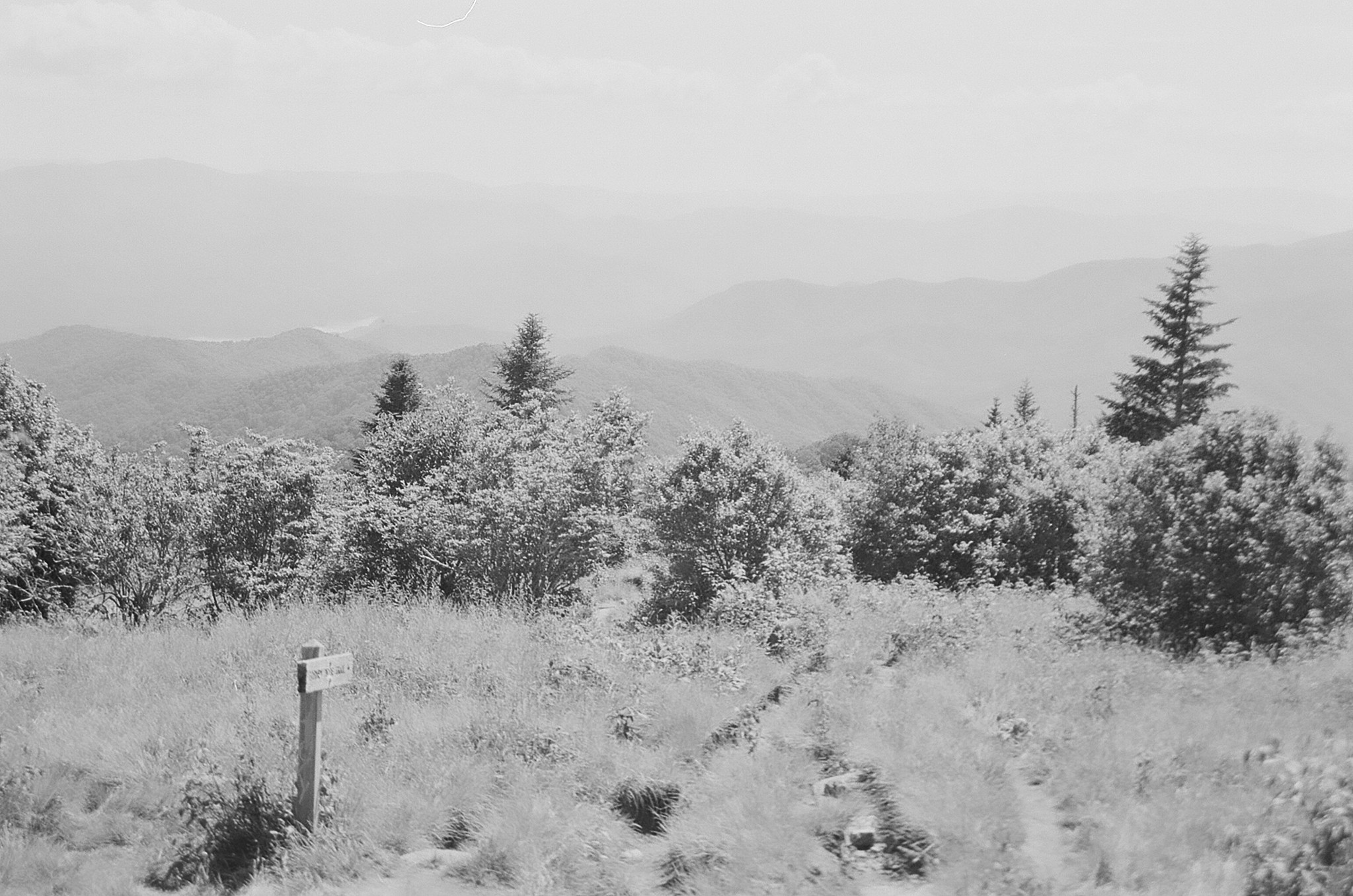 Hiking Forney Ridge Trail through Andrews Bald.
