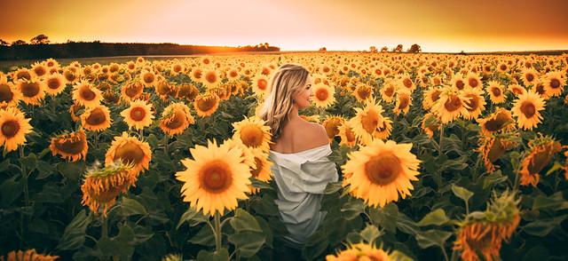 Sonnenblumen-95.jpg