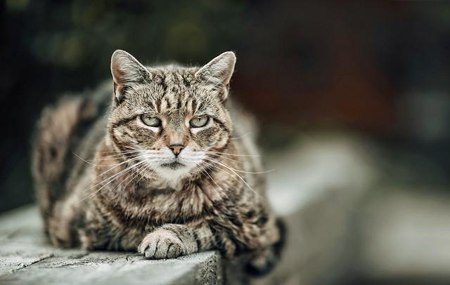 """Cats are connoisseurs of comfort.""  ― James Herriot,"