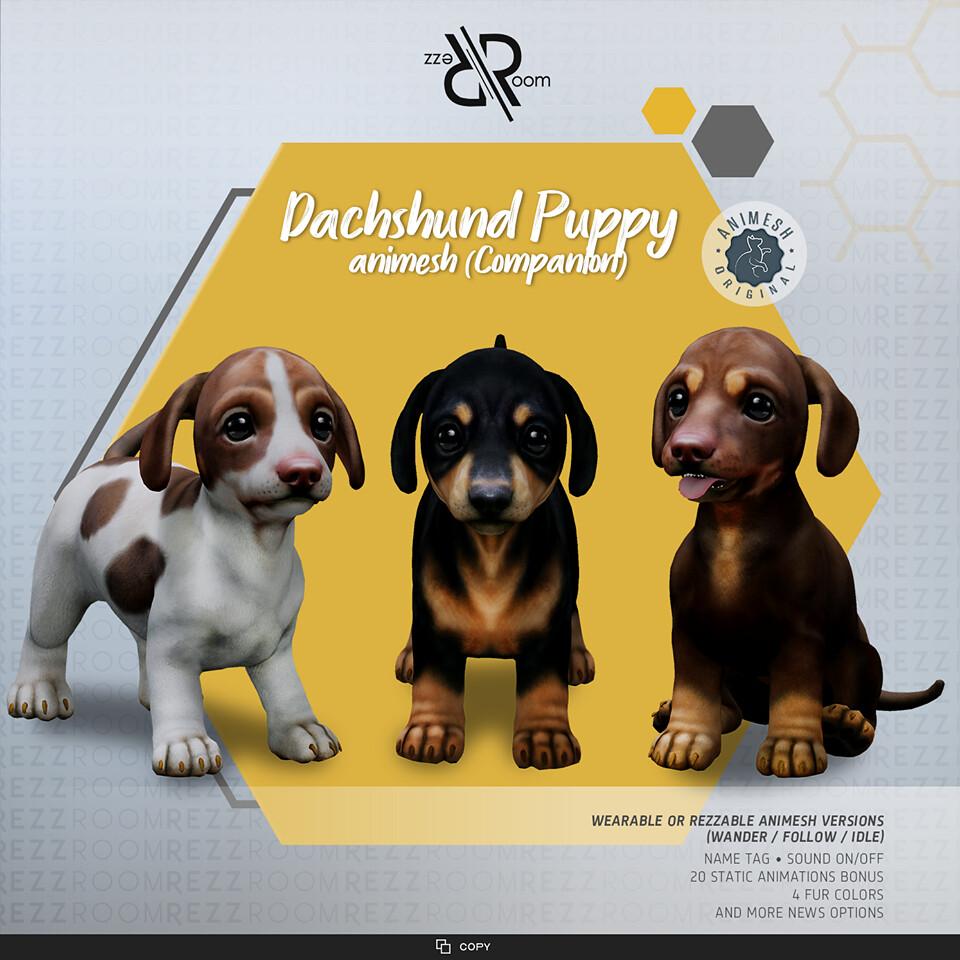 [Rezz Room] Dachshund Puppy Animesh  (Companion