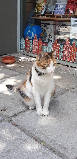 Η γάτα του βιβλιοπωλείου   The bookstore cat