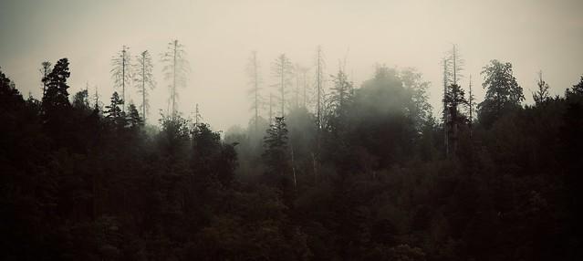 Good Morning dead German forest.