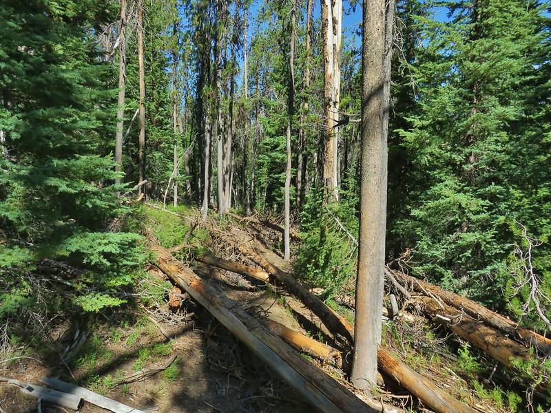 Howlock Mountain Trail