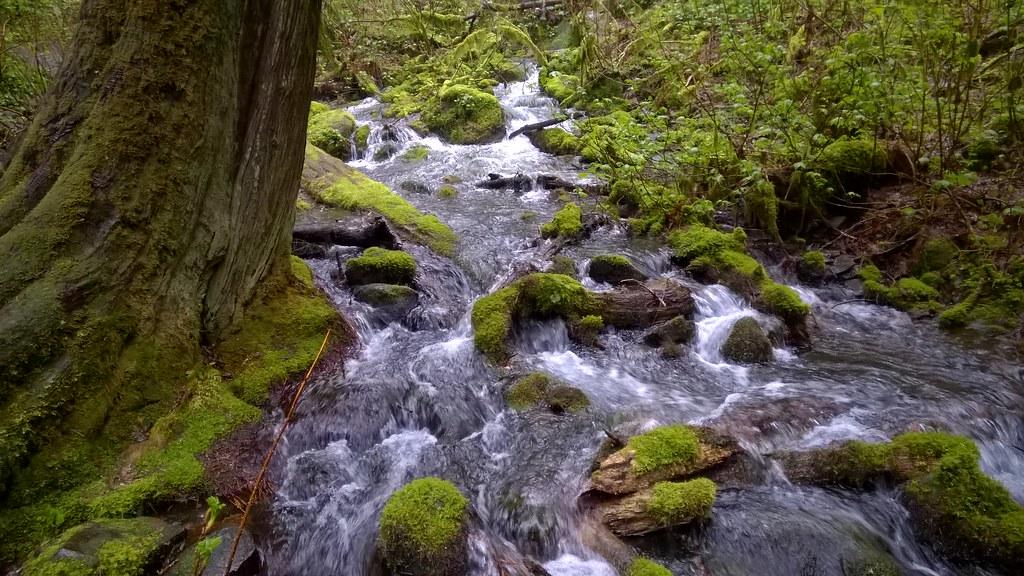 Wahkeena Spring, Columbia River Gorge National Scenic Area  04/04/2016