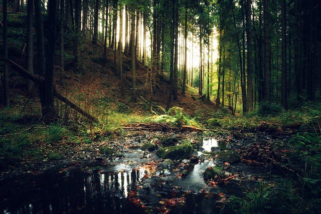 Waldregen