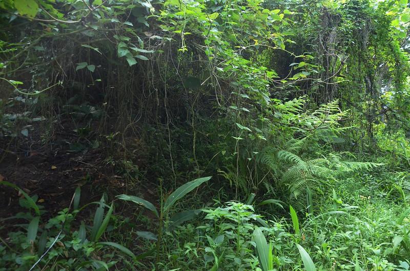 象山岔路荒廢的山徑