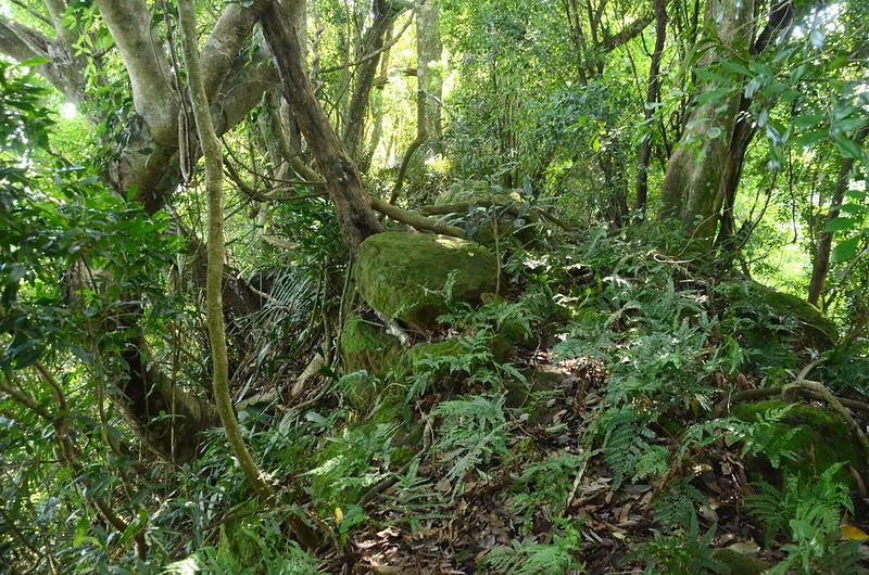 象山 亂岩瘦稜路段 (1)