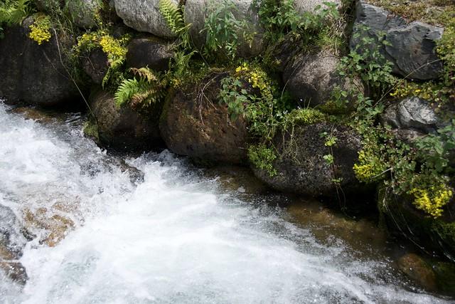 El riu Ter a Vilallonga de Ter, Ulldeter, Ripollès, Girona.
