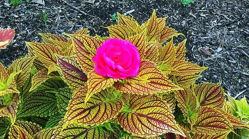 clouds weather sky scenic landscape travel photography flower rose garden plants elements explore park tulsa oklahoma