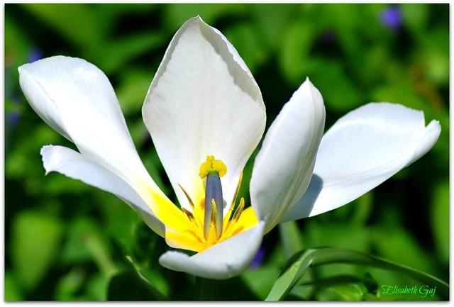 FLOWERS- 101
