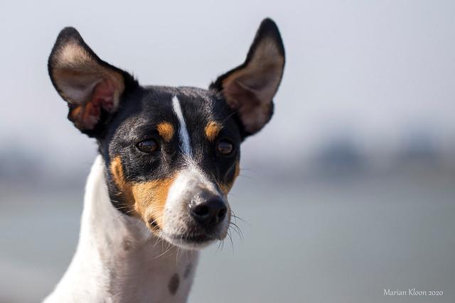 Ears upright in the wind