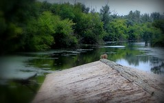 Carska bara (Special Nature Reserve), Zrenjanin, Serbia
