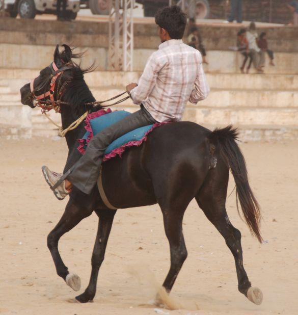 DSC_1767IndiaPushkarCamelFair