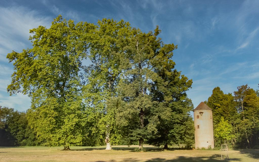Les grands arbres du Parc de Pourtalès la suite... 50210797898_77514b544e_b