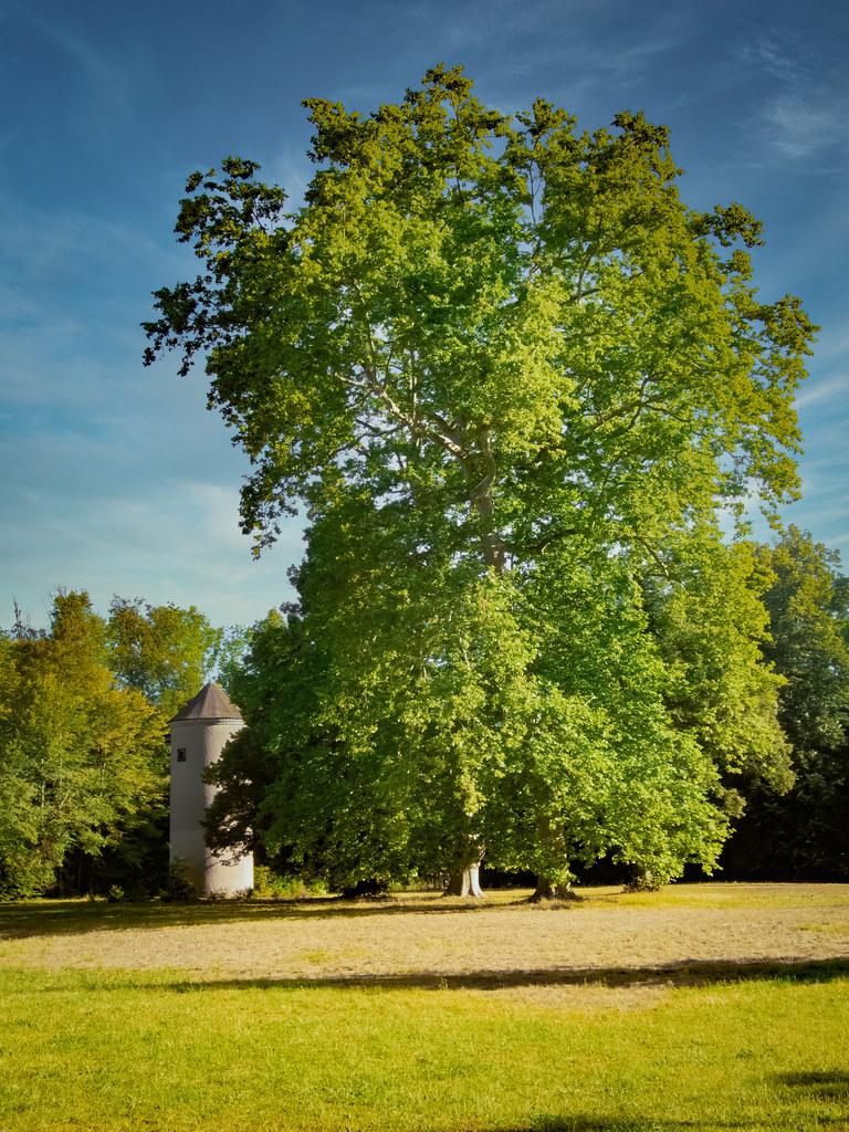 Les grands arbres du Parc de Pourtalès la suite... 50210799363_4f50f2e3f5_b