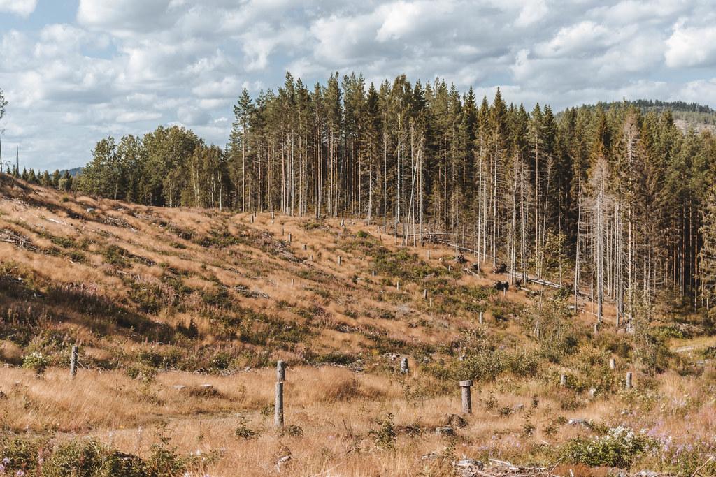200808 - Fäberget