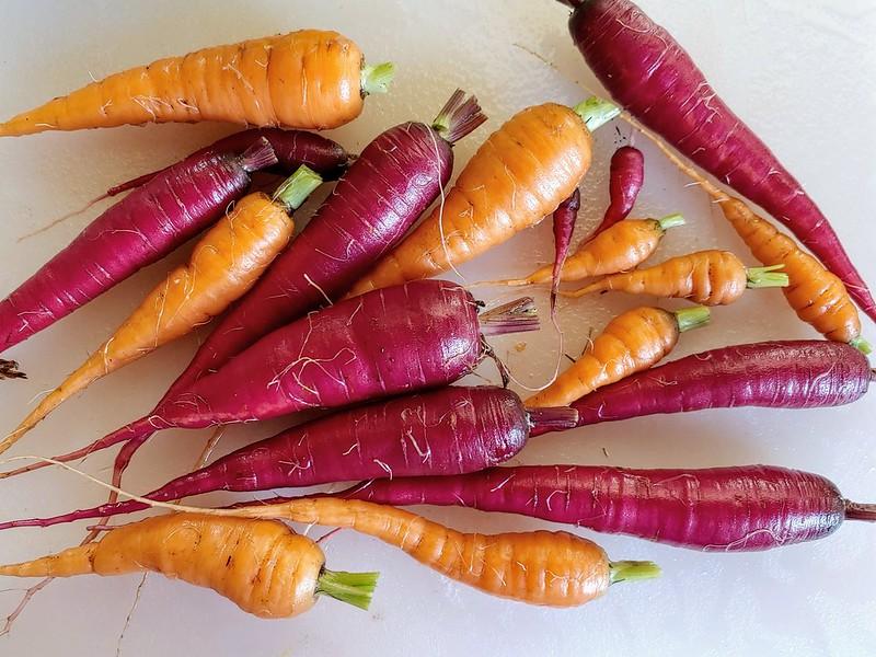 Danvers 126 & Cosmic Purple Carrots