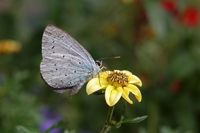 366 - Image 223 - Small blue...