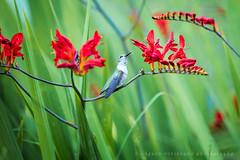 Front yard birding