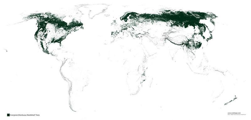 Хвойные леса планеты.
