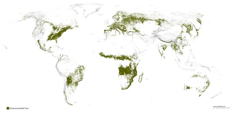 Листопадные широколиственные леса
