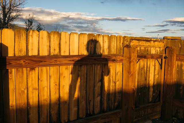 a shadow self portrait