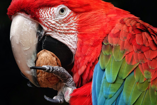 Colourful macaw!