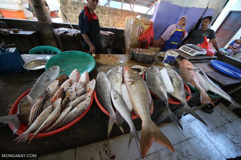 Fresh fish at a market in Labuan Bajo, Indonesia