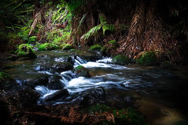 Tarra Valley Rainforest Walk  # 2