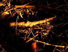 Dark branch