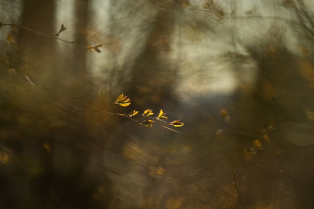 Aube en forêt