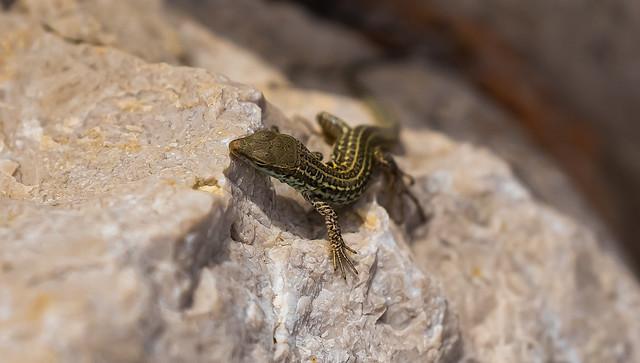 ...wildlife in croatia....
