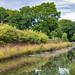 Wey & Arun Canal #2