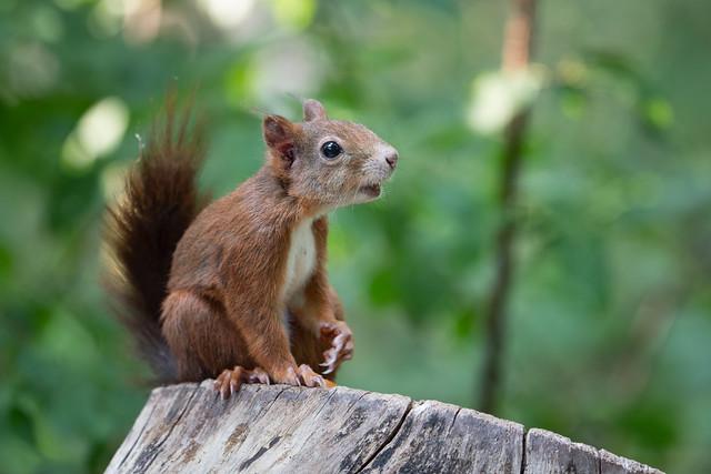 Squirrel discusses with me