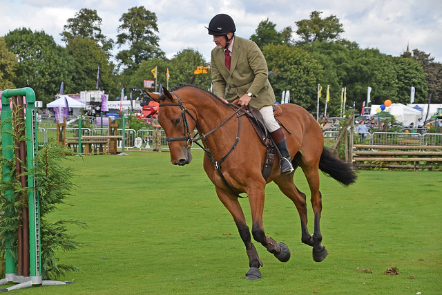 Horses 053 - Perth Agricultural Show 2018