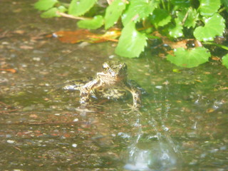 Amphibians take over the garden