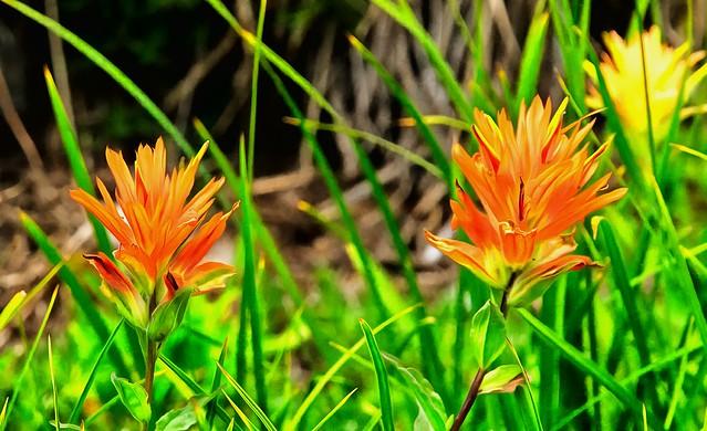 Vegetation at Mount Rainier National Park