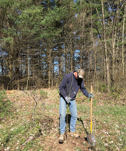 Tree_Planting_2020_Ausable_Bayfield_Conservation_NR