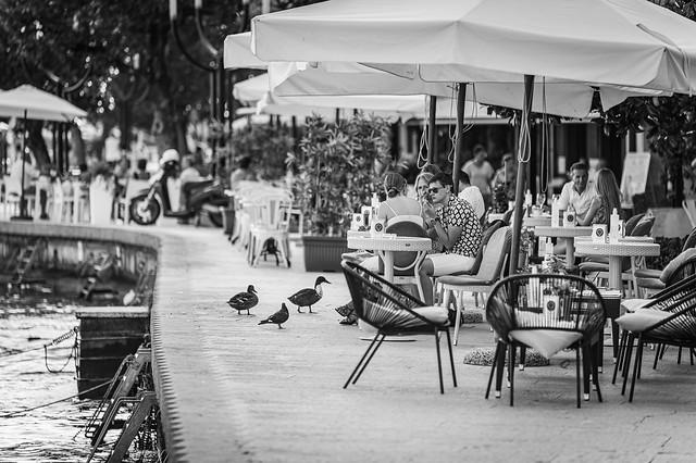 Ducks at a Café