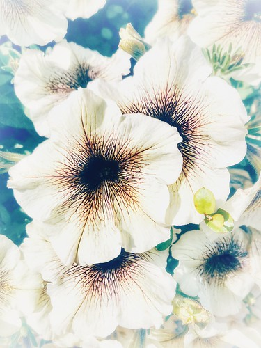 flowers, august 11, 2020
