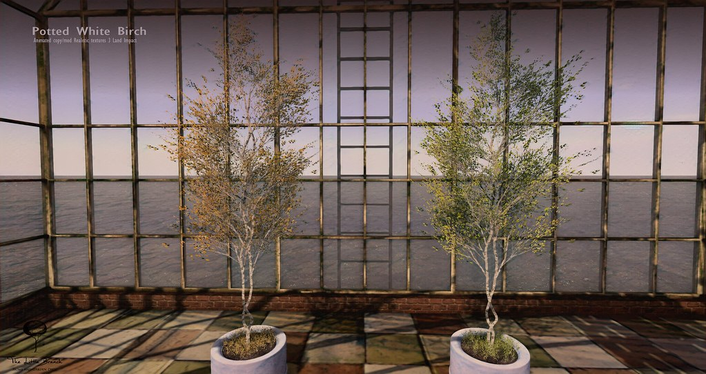 The Litte Branch – Potted White Birch – Equal10