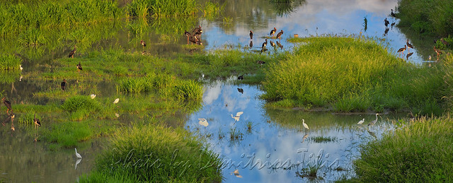 Το πέρασμα των μαυροπελαργών  The passage of black storks