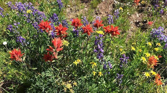 North Cascades wildflowers