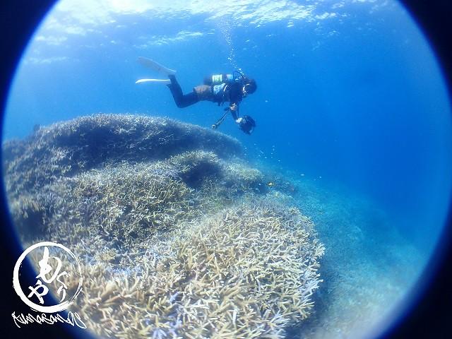 極上珊瑚を堪能しつつもしっかりカメラ目線のあっちゃん☆