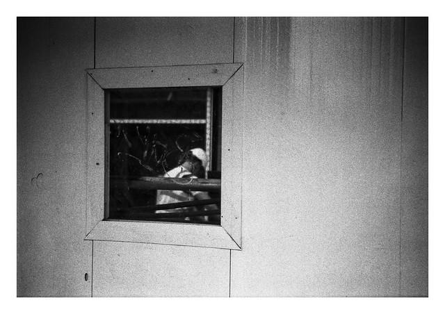 A window on work
