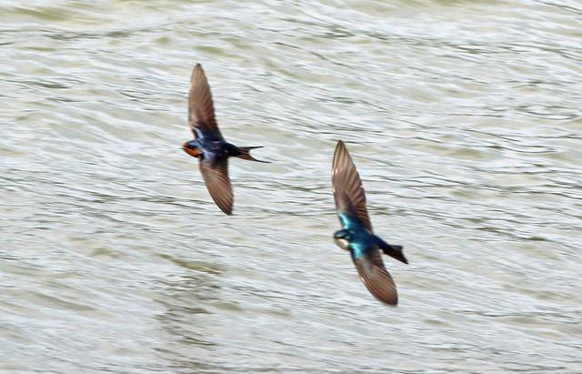 Synchronized tandem flight formation