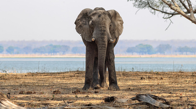 World Elephant Day - 12th August 2020