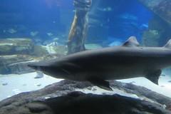 Long Island Aquarium - Aug 2020