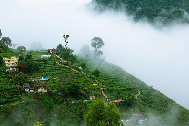 Green valley with farming | Kodaikanal
