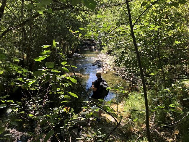 Sele en el río Burbia
